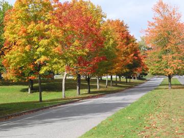 autumn colors on a street in Bellingham, Washington